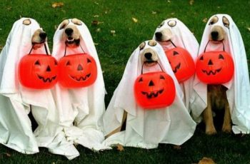 65+ Cute Dog Halloween Costumes Ideas